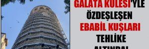 Galata Kulesi'ye özdeşleşen ebabil kuşları tehlike altında!