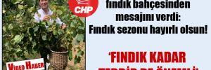 CHP'li Kaya fındık bahçesinden mesajını verdi: Fındık sezonu hayırlı olsun!