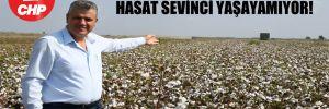 CHP'li Barut: Pamuk üreticisi hasat sevinci yaşayamıyor!