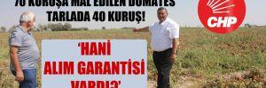 CHP'li Gürer: 70 kuruşa mal edilen domates tarlada 40 kuruş!