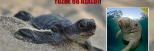 Son 50 yılda canlı türlerinin popülasyonları yüzde 68 azaldı!