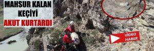 Kayalıkta mahsur kalan keçiyi AKUT kurtardı!