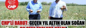 CHP'li Barut: Geçen yıl altın olan soğan bu sene tarlada kaldı!
