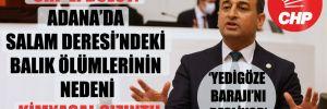 CHP'li Bulut: Adana'da Salam Deresi'ndeki balık ölümlerinin nedeni kimyasal sızıntı!