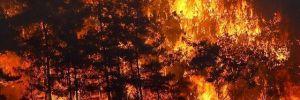 Orman yangınıyla mücadele dördüncü gününde: 88 yangın kontrol altına alındı, 10 yangın sürüyor
