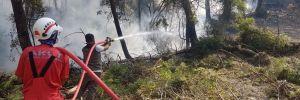 30 milyon yanmış ağacın kesim çalışmaları başladı!