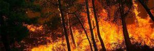 '144 orman yangınının 134'ü kontrol altına alındı'