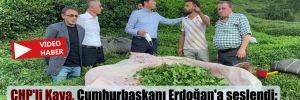CHP'li Kaya, Cumhurbaşkanı Erdoğan'a seslendi: Çay üreticisinin feryadını artık duyun!