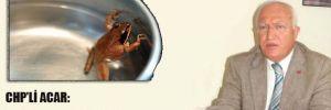 CHP'li Acar: Anadilde savunma soğuk suya atılan kurbağanın yavaş yavaş ısıtılıp öldürülmesi gibi