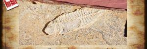 800 metre yükseklikte balık fosili buldu