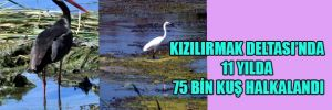Kızılırmak Deltası'nda 11 yılda 75 bin kuş halkalandı