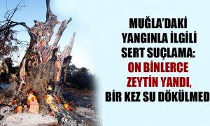 Muğla'daki yangınla ilgili sert suçlama: On binlerce zeytin yandı, bir kez su dökülmedi