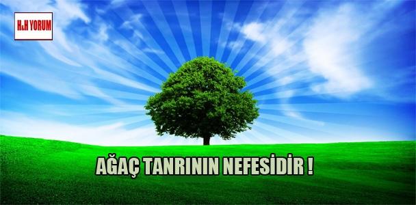 Ağaç tanrının nefesidir !