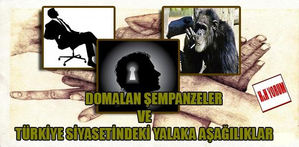 Domalan şempanzeler ve Türkiye siyasetindeki yalaka aşağılıklar