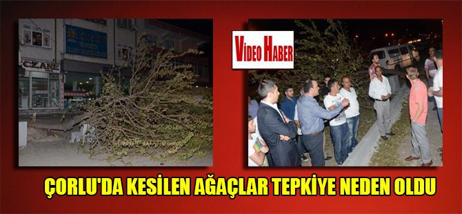 Çorlu'da kesilen ağaçlar tepkiye neden oldu