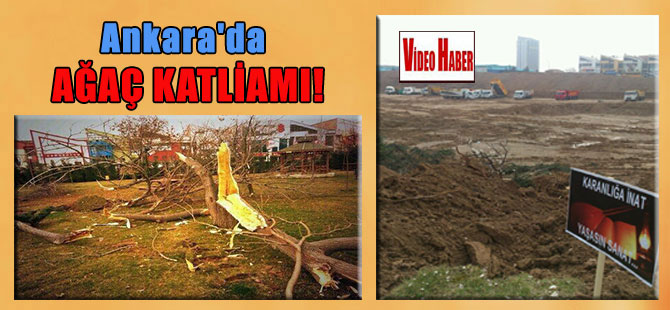 Ankara'da ağaç katliamı!