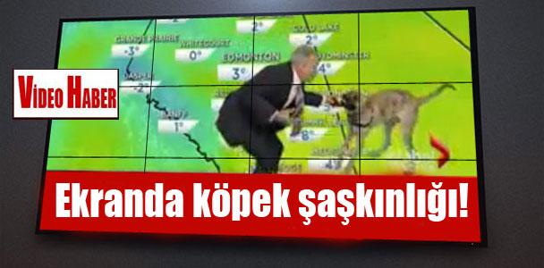 Ekranda köpek şaşkınlığı!