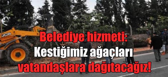 Belediye hizmeti: Kestiğimiz ağaçları vatandaşlara dağıtacağız!