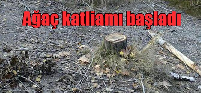 Ağaç katliamı başladı