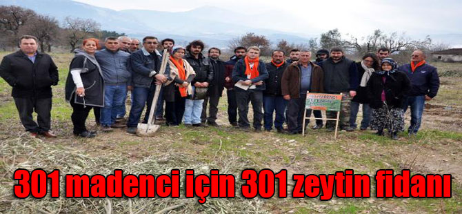 301 madenci için 301 zeytin fidanı