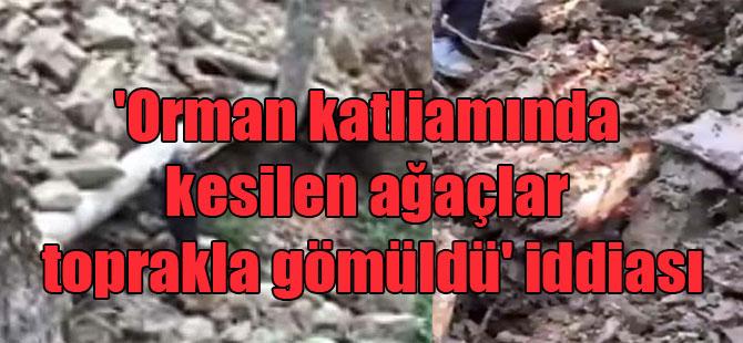 'Orman katliamında kesilen ağaçlar toprakla gömüldü' iddiası