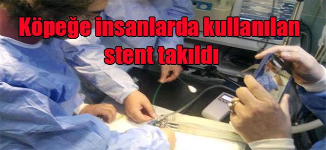 Köpeğe insanlarda kullanılan stent takıldı