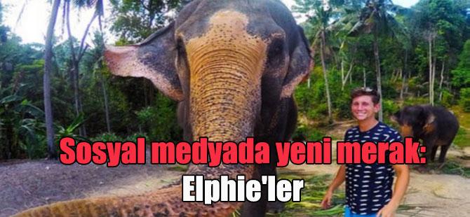 Sosyal medyada yeni merak: Elphie'ler