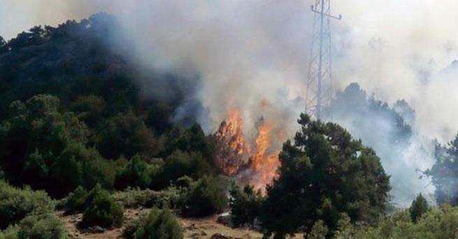 Piknik ateşi ormanı yaktı: 3 gözaltı