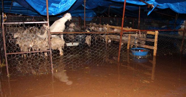 Antalya'da hayvan pazarı su altında!