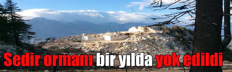 Sedir ormanı bir yılda yok edildi