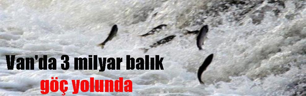 Van'da 3 milyar balık göç yolunda