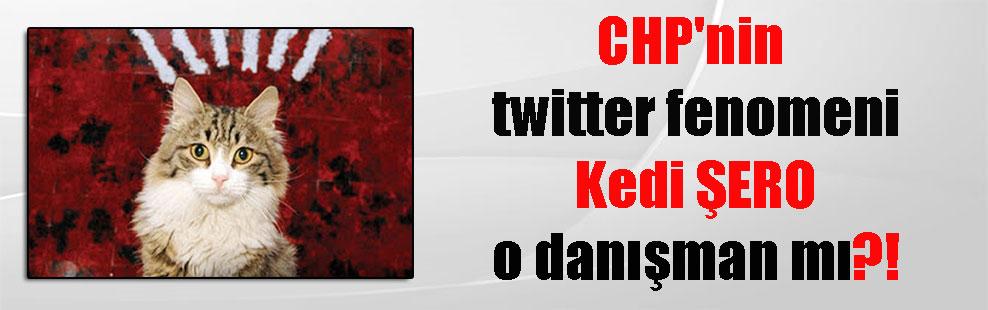 CHP'nin twitter fenomeni Kedi ŞERO o danışman mı?!