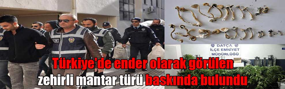 Türkiye'de ender olarak görülen zehirli mantar türü baskında bulundu