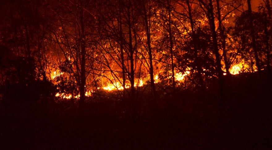 Bolu'da orman yangını!