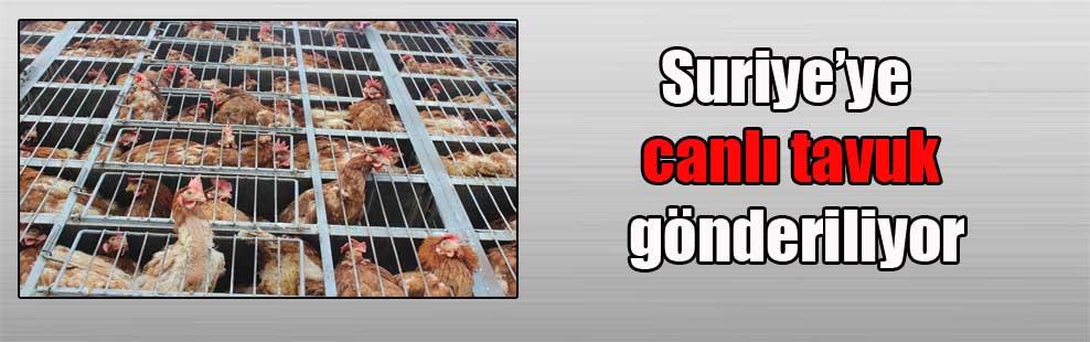 Suriye'ye canlı tavuk gönderiliyor