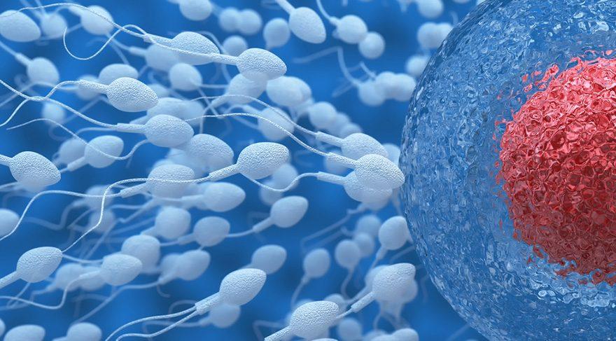 Sperm kalitesini artırmanın en doğal yolu
