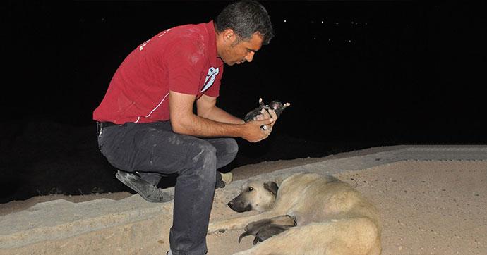 Rögarda mahsur kalan 5 köpek yavrusu 1 saatte kurtarıldı