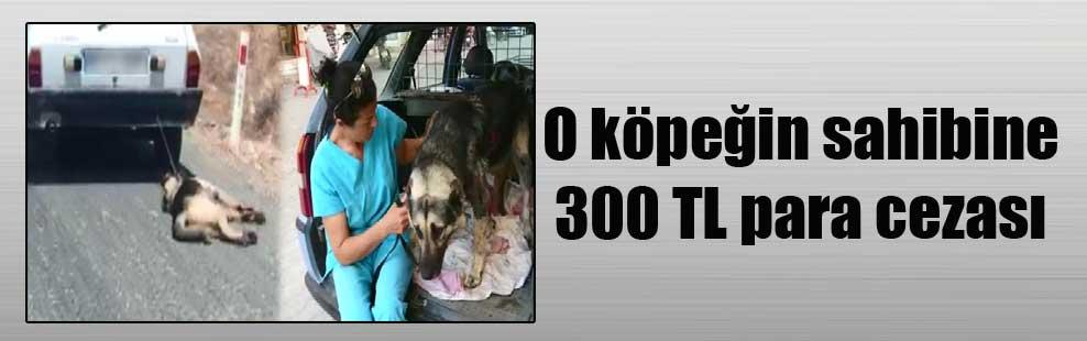 O köpeğin sahibine 300 TL para cezası