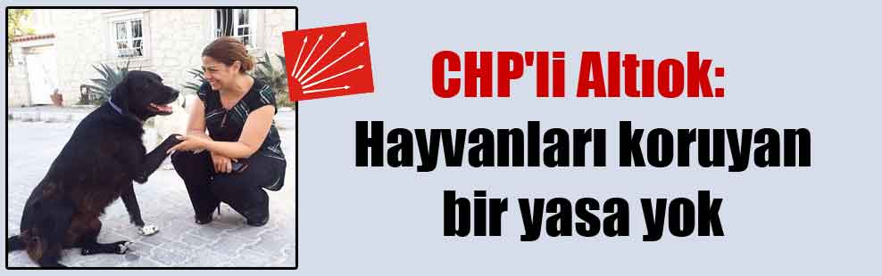CHP'li Altıok: Hayvanları koruyan bir yasa yok
