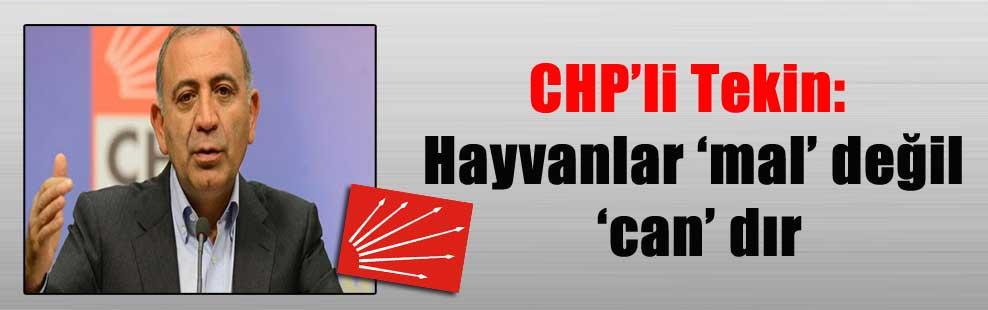 CHP'li Tekin: Hayvanlar 'mal' değil 'can' dır