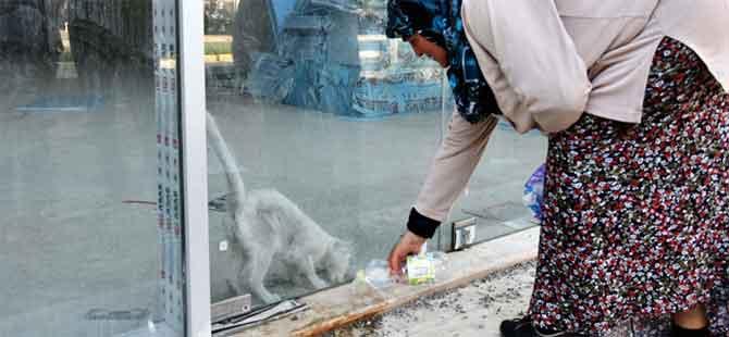 Baykal'ın iş merkezinde kedi kurtarma operasyonu
