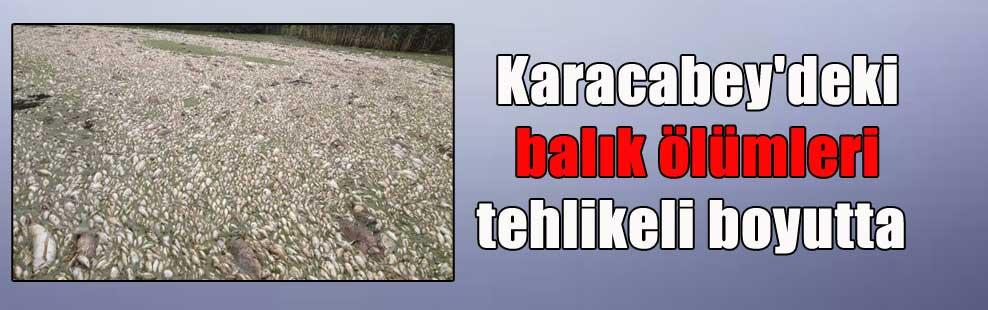 Karacabey'deki balık ölümleri tehlikeli boyutta