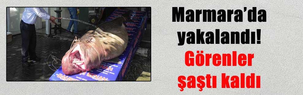 Marmara'da yakalandı! Görenler şaştı kaldı