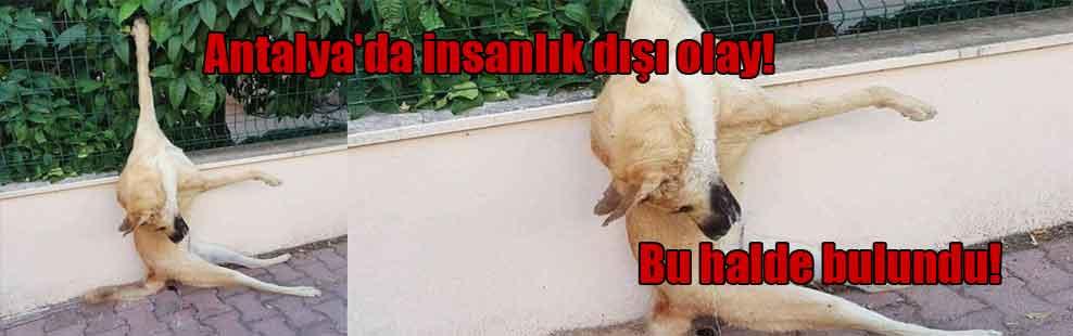 Antalya'da insanlık dışı olay! Bu halde bulundu!