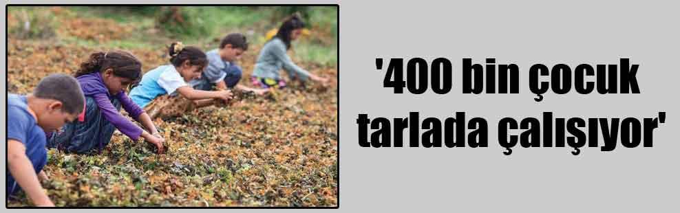 '400 bin çocuk tarlada çalışıyor'