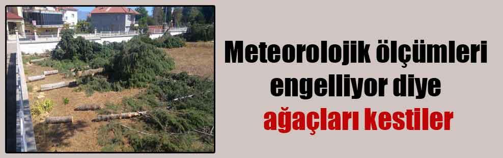 Meteorolojik ölçümleri engelliyor diye ağaçları kestiler