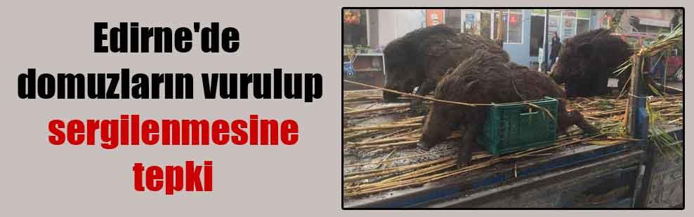 Edirne'de domuzların vurulup sergilenmesine tepki