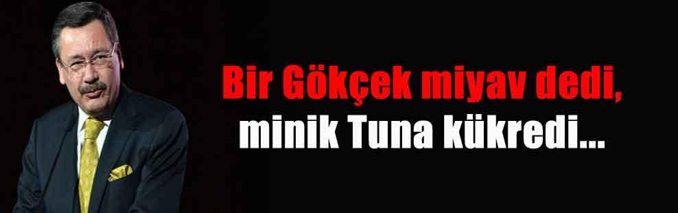 Bir Gökçek miyav dedi, minik Tuna kükredi…