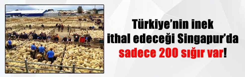 Türkiye'nin inek ithal edeceği Singapur'da sadece 200 sığır var!