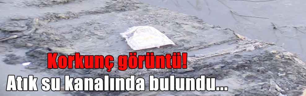 Korkunç görüntü! Atık su kanalında bulundu…